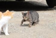 ジビエ!?小型野生動物対策!!可愛いだけじゃニャーイ!のよ、縁側ネコはねっ