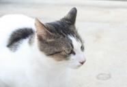 モフ帰るの巻 可愛いだけじゃニャーイ!のよ、縁側ネコはねっ