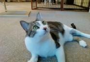 お屋敷町の猫 猫という現象  - マンション騒動記⑩ -