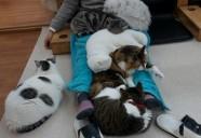猫カフェCat tailのネコノリー症候群に気を付けて