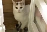ミスもりねこ!!美猫すぎるポリーちゃん!!