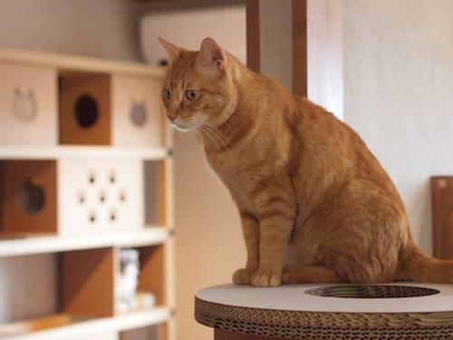 赤猫 (2)