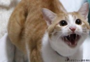 猫が毛繕いしたら即死した!?