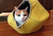猫たちの冬支度、始めてますか?