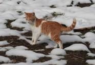 11月の雪!!さむいじゃニャーイの!の巻! 可愛いだけじゃニャーイ!のよ、縁側ネコはねっ