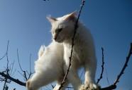 縁側ボーイズの巻!! 可愛いだけじゃニャーイ!のよ、縁側ネコはねっ