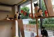 【CAT'S INN TOKYO】東京都板橋本町に猫カフェを併設したゲストハウスが営業中♪