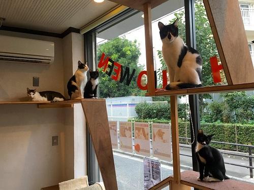 CAT'S INN TOKYO3
