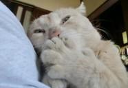 縁側ガールズの巻!! 可愛いだけじゃニャーイ!のよ、縁側ネコはねっ