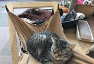 もりおかハンディ猫シェルターへのご支援ありがとうございます!