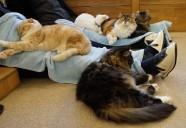 年中無休の猫カフェ。猫のストレス度は?