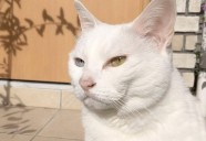 白猫の幻影 猫という現象 - マンション騒動記⑪ -