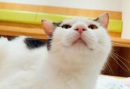 笑顔が絶えない空間で、猫と過ごすことが出来る空間ー猫見家