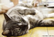 猫と相撲の裏話(その1)