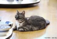 モル親方のお仕事:猫と相撲の裏話(その2)