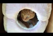 にゃんマガ猫編集長のフミフミ