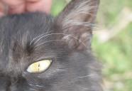 アズキ何故か?怒られるの巻 可愛いだけじゃニャーイ!のよ、縁側ネコはねっ