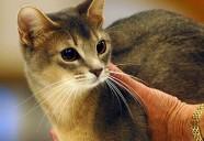人間を一番愛する猫は?100人の獣医師へのアンケートで分かった猫の性格