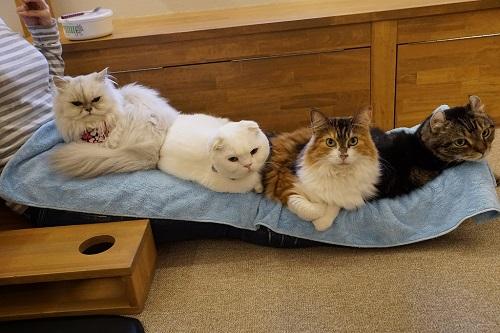 メイン猫の習性09733