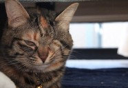 猫は世界一ポジティブな生き物?