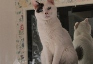 保護猫カフェから猫を売らない猫のお店へ