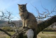 縁側ネコは何故木に登るっ!の巻!! 可愛いだけじゃニャーイ!のよ、縁側ネコはねっ