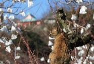 縁側ネコの正月の巻 可愛いだけじゃニャーイ!のよ、縁側ネコはねっ