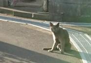猫も走れば、犬も人も走る
