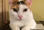 猫は人を成功に導く!?返報性のルールと自分主義