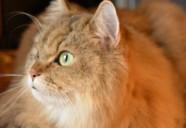 【医療相談】猫の腫瘍について-抗がん剤治療に踏み切る決断-