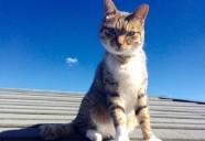 緊急時のために知っておきたい猫の誤食と応急処置