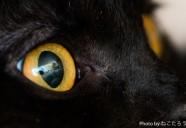 あなたは私に石を投げる人ですか? 猫の瞳に映るもの
