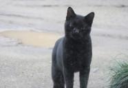 クロネコ 街黒の巻!!(下編) 可愛いだけじゃニャーイ!のよ、縁側ネコはねっ