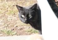 クロネコの巻!!(上編) 可愛いだけじゃニャーイ!のよ、縁側ネコはねっ