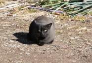 クロネコ 山黒の巻!!(中編) 可愛いだけじゃニャーイ!のよ、縁側ネコはねっ