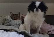 犬と猫の睡眠時間は ほぼ同じって知ってた?猫と犬と人の怖い共通点とは?