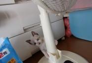 猫は○○。ただし、その猫による。−猫専用賃貸 feles 6−