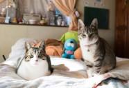 スマホの中は猫の写真でいっぱい 〜家族になった保護猫たち〜