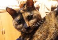セミナー三昧の日々。− 猫専用賃貸 feles 4−