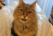 猫の感染症予防について、獣医師がぶっちゃけます その①