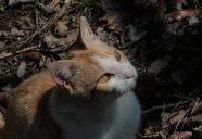 春は狩りの季節の巻! 可愛いだけじゃニャーイ!のよ、縁側ネコはねっ
