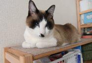 Home sweet home4 〜安全・安心な家 −猫専用賃貸 feles 12−