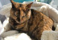 Home sweet home3 〜住宅の資金計画2 −猫専用賃貸 feles 11−