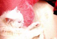 猫に「スリッカーブラシ」は使ってはいけません!?
