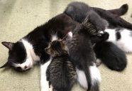母猫の母乳はスーパーフード!