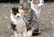 オオスズメバチの季節の巻!可愛いだけじゃニャーイ!のよ、縁側ネコはねっ