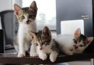 猫も幸せ、人も幸せ、多頭飼育生活