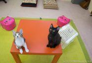 猫が集まる様子 ~ひみつの基地で猫と遊ぶ~