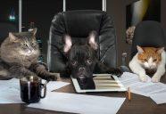 猫雑誌はどうやって作られるのか