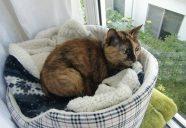 Home sweet home8 ~窓 −猫専用賃貸 feles 16−